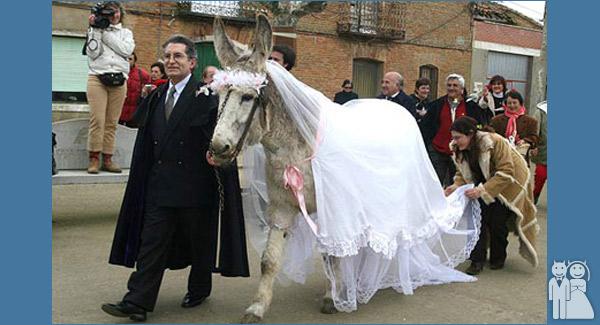 marrying a jackass wedding unveils funny wedding photos