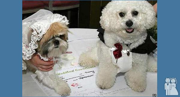 funny dog wedding photo