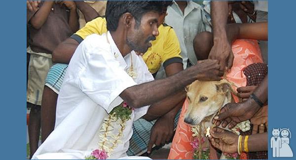 funny animal wedding photo